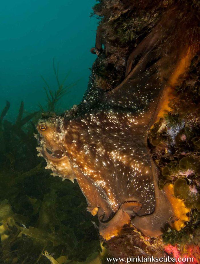 wm flinders octopus on pylon